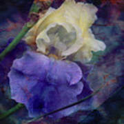 Jeweled Iris Poster