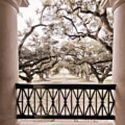 Josephine's View Of Oak Alley Plantation Poster