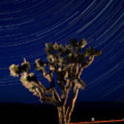 Joshua Tree And Star Trails Poster