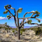 Joshua Tree National Park Winter's Day Poster