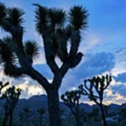 Joshua Tree Sunset Skies Poster
