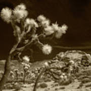 Joshua Trees And Boulders In Infrared Sepia Tone Poster