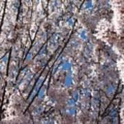 Joy Of Spring Poster