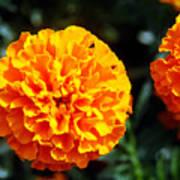 Joyful Orange Floral Lace Poster