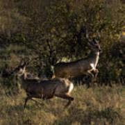Jumping deer Poster