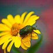 June Beetle Poster
