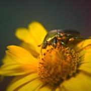 June Beetle Exploring Poster