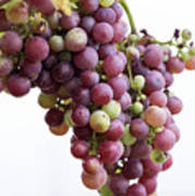 June Grapes #1 Poster