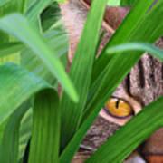 Jungle Cat Poster by Bob Nolin