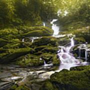 Jungle Riverflow Scene Poster