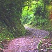 Jungle Trail Poster