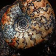 Jurassic Ammonite Poster
