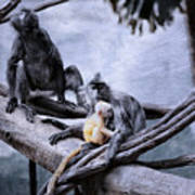 Just Monkeying Around Poster