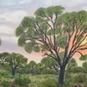 Kalahari Poster