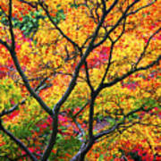 Kaleidoscope Of Autumn Color Poster