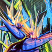 Kauai Bird Of Paradise Poster