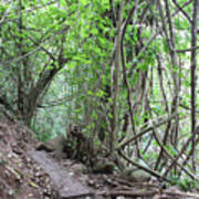 Kauai Forest Path For Secret Falls Poster