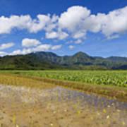 Kauai Wet Taro Farm Poster