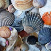 Kayla's Shells Poster