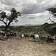 Kenya: Cattle, 1936 Poster