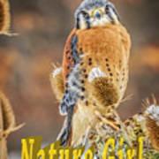 Kestrel Nature Wear Poster