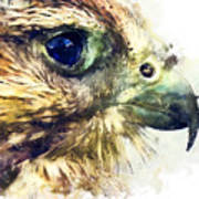 Kestrel Watercolor Painting Poster
