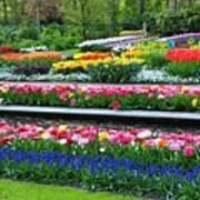 Keukenhof Tulips Ornamental Garden  Poster