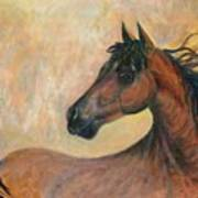Kiger Mustang Poster