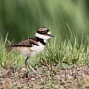 Killdeer - 24 Hours Old Poster