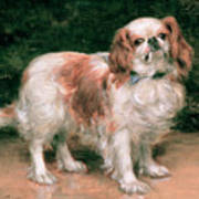 King Charles Spaniel Poster by George Sheridan Knowles