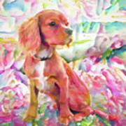 King Charles Spaniel Pastel Watercolors Poster