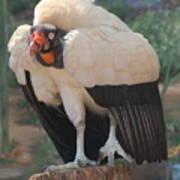 King Vulture 1 Poster