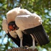 King Vulture 3 Poster
