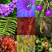 Kingdom Plantae Poster