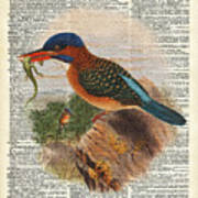 Kingfisher Bird With A Lizard Illustration Over A Old Dictionary Poster