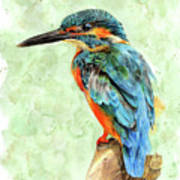 Kingfisher Blue Poster