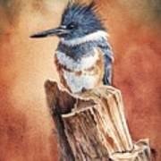 Kingfisher I Poster