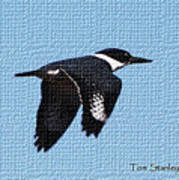 Kingfisher In Flight Poster