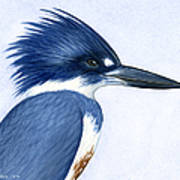 Kingfisher Portrait Poster