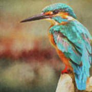 Kingfisher's Perch Poster