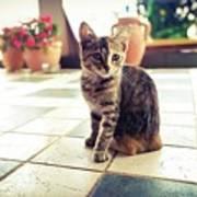 Kitcat Poster