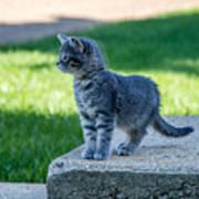 Kitten 1 Poster