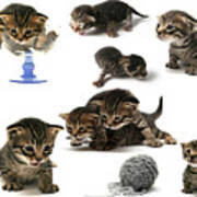 Kitten Collage Poster