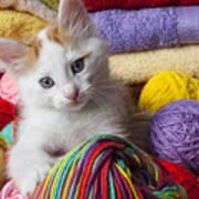 Kitten In Yarn Poster