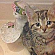 Kitten Love Poster