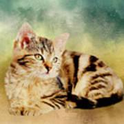 Kitten - Painting Poster