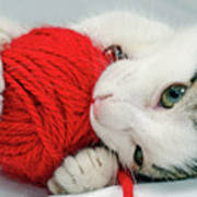 Kitten Playing With Red Ball Of Yarn Poster