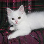 Kitten Snow White On Green And Pink Plaid Poster