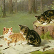 Kittens Playing Poster by Ewald Honnef