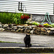 Kitty Across The Street  Poster